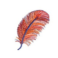 red feather plume machine embroidery design designs from needle passion embroidery npe