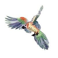 parrot bird machine embroidery design for variegated thread art pes hus dst needle passion embroidery npe
