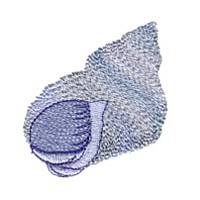 seashell machine embroidery design for variegated thread multicolor multicolour thread sea shell art pes hus dst needle passion embroidery npe